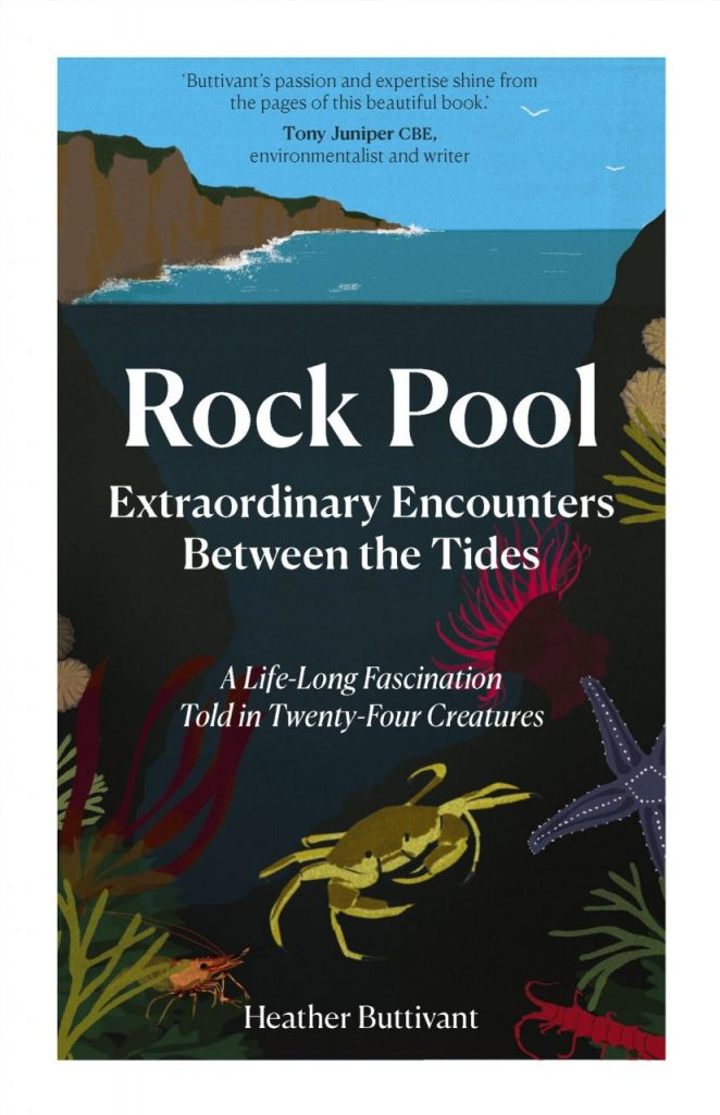 rock-pool-project-Rock Pool - Extraordinary Encounters Between the Tides