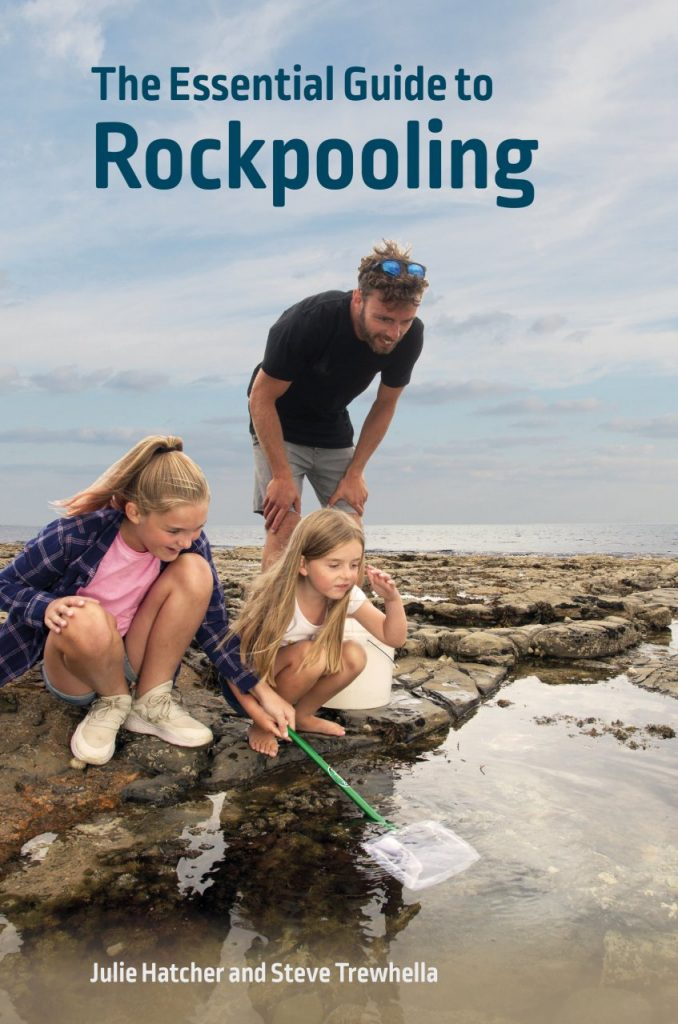 rock-pool-project-The Essential Guide to Rock Pooling