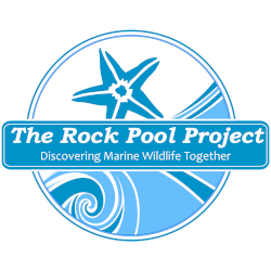 rock-pool-project-logo