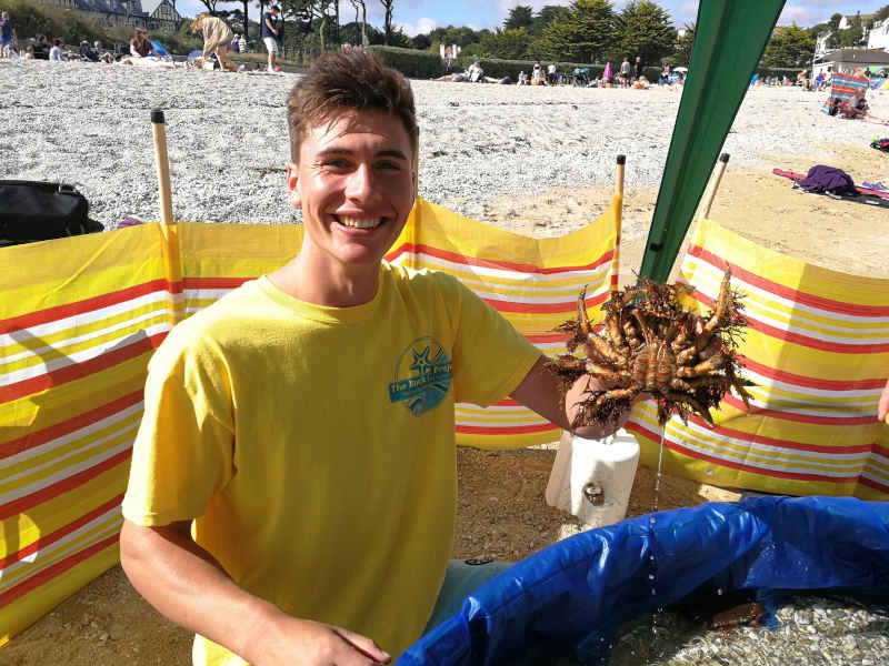 rock-pool-project-mobile-spider-crab
