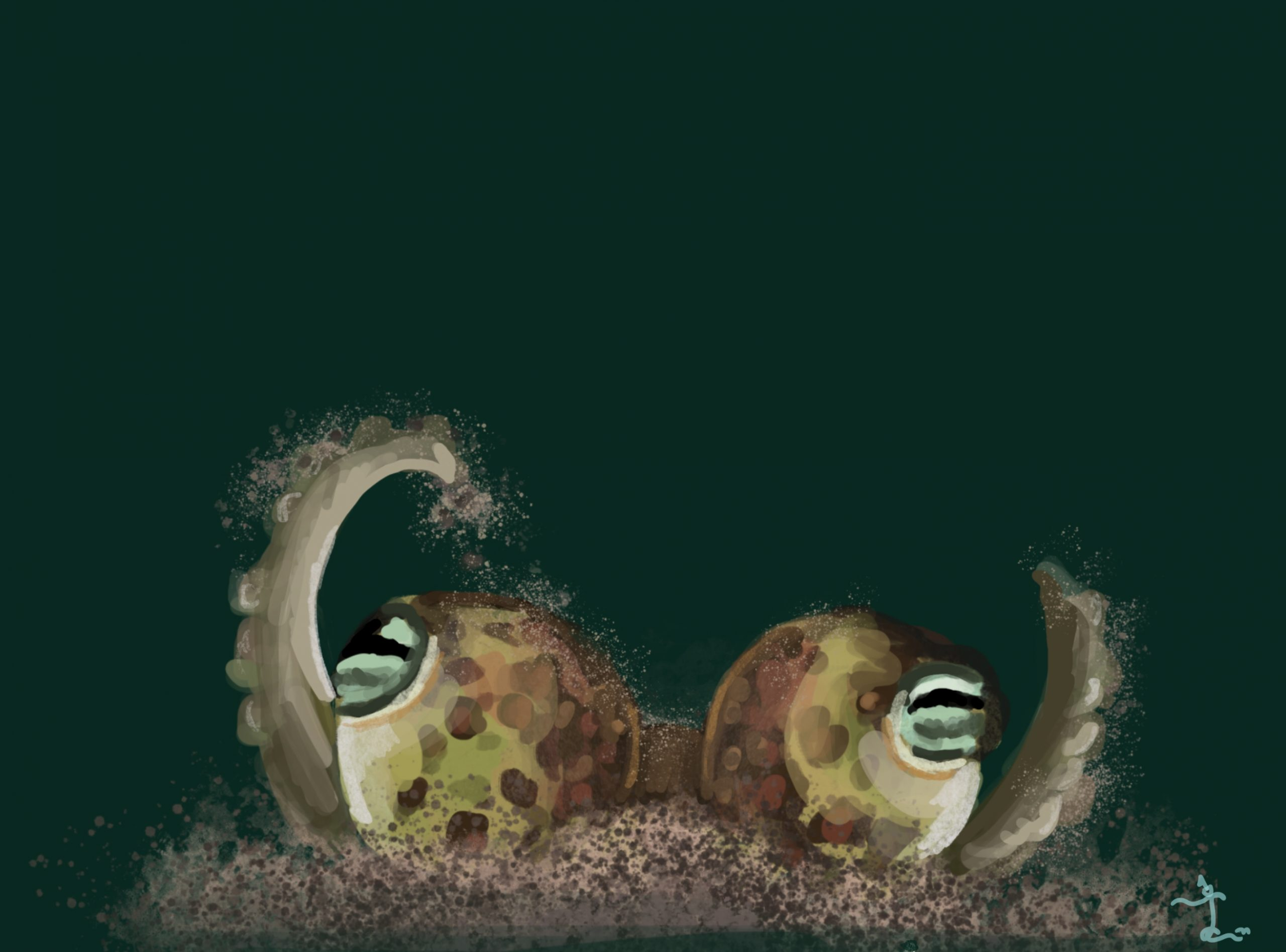bobtail squid illustration Laura