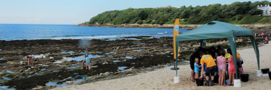 mobile-rock-pool-falmouth-cornwall-rock-pool-project