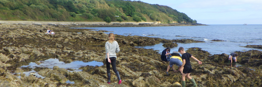rockpooling-cornwall-falmouth-rock-pool-project